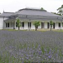 Boso no Mura - Lavender and Old Schoolhouse